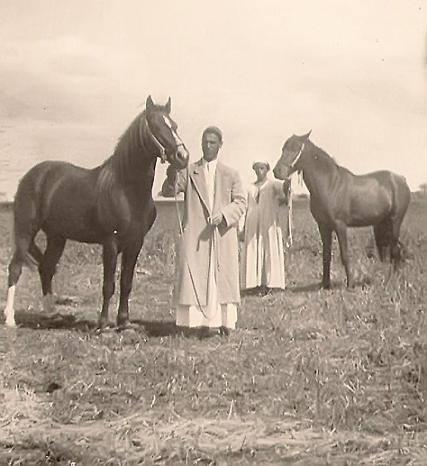 خيول الطحاوية