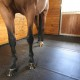igk-equestrian-double-h-farm